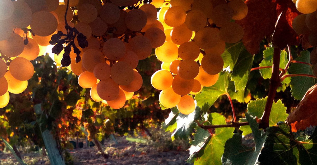 vino-pedro-ximenez-moscatel-guia-vinos-jamones-simeon