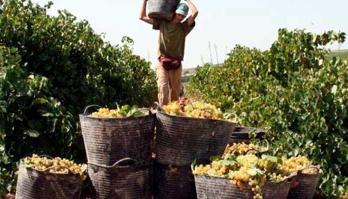 feria-vendimia-jerez-de-la-frontera-fiesta-vinos-2